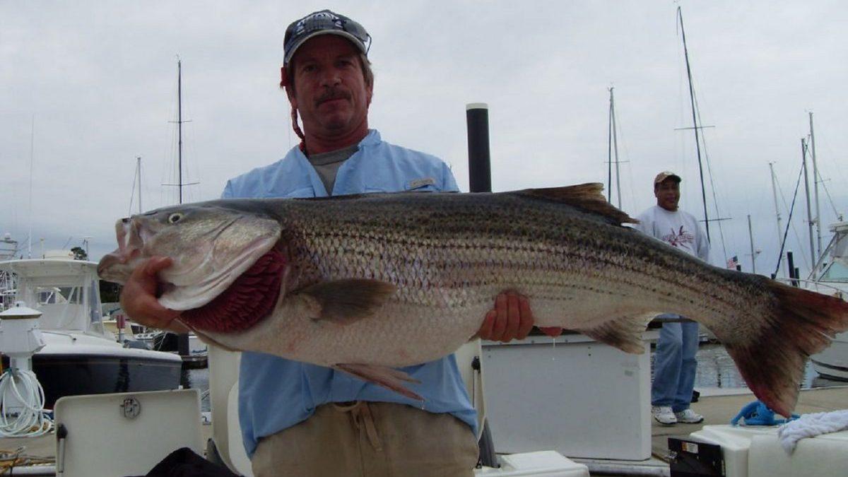Links kingfisher charters fishing charters ct charter for Ct fishing charters